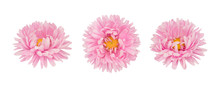 Set Of Pink Aster Flowers Isol...