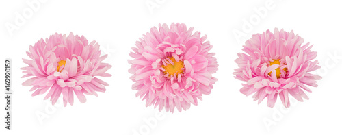 Set of pink aster flowers isolated on a white Canvas Print