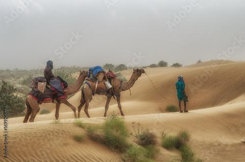 Fotografija  Cameleer in desert