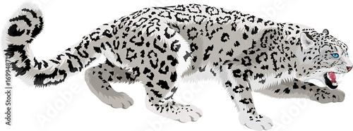 Photographie  vector mountains snow leopard