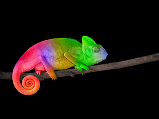 Chameleon on a branch with a spiral tail. Bright colorful rainbow color scales