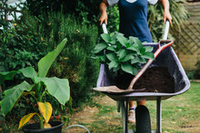 Young Mixed Race Woman Planting Plants In A Garden