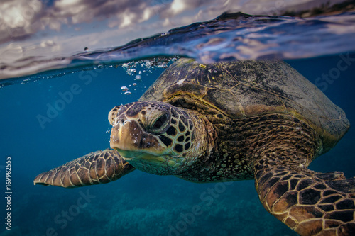 Foto op Aluminium Schildpad Sea turtle near water surface. Closeup portrait of aquatic animal