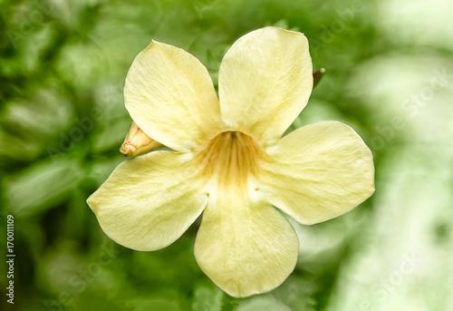 Photo amanda flower