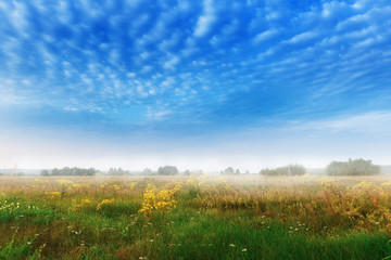 FototapetaLandscape with foggy meadow in morning time