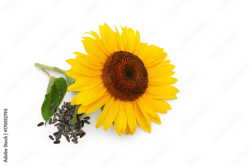 Sonnenblume und Samen auf weißem Hintergrund
