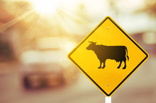 Animal Or Cow Warning Sign On ...