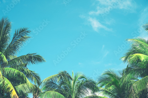 Foto  Copy space of tropical palm tree with sun light on sky background