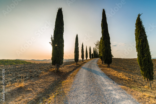 Fotobehang Toscane road through cypresses