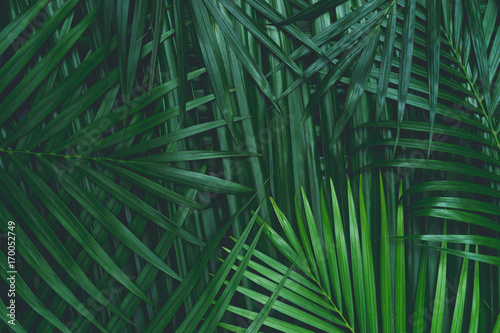 Poster  coconut leaf