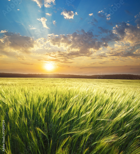 Photo  Meadow of wheat