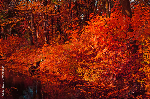 Foto op Aluminium Rood traf. The red river of the dark forest in autumn.