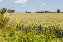 Wild Landscape In Full Nature, Norfolk