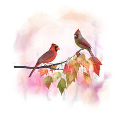 FototapetaMale and Female Northern Cardinals watercolor