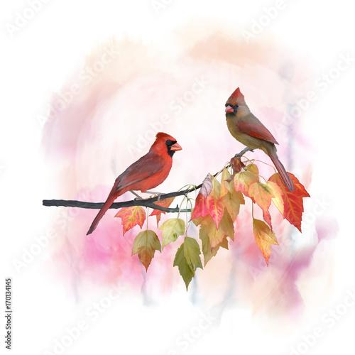 akwarela-meskiej-i-zenskiej-northern-cardinals