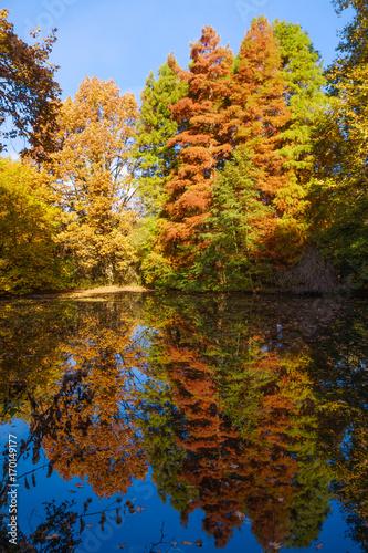Foto op Canvas Bomen Autumn Landscape. Park in Autumn