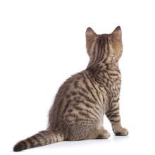 Rear View Of Tabby-cat Kitten ...
