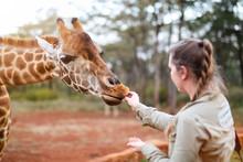 Young Woman Feeding Giraffe In...