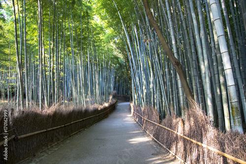 In de dag Zwart Japanese bamboo forest in Arashiyama, Kyoto, JapanArashiyama () is a pleasant, touristy district in the western outskirts of Kyoto.