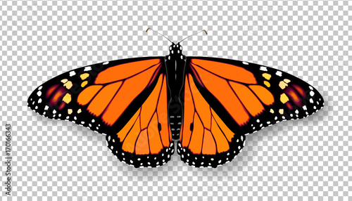 Realistic 3d Monarch butterfly Canvas Print