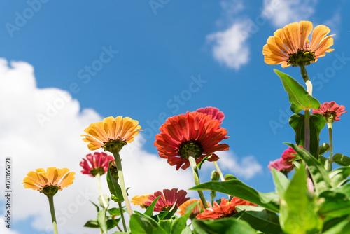 Poster Jaune Farbenfrohe Blumen vor blauem Himmel