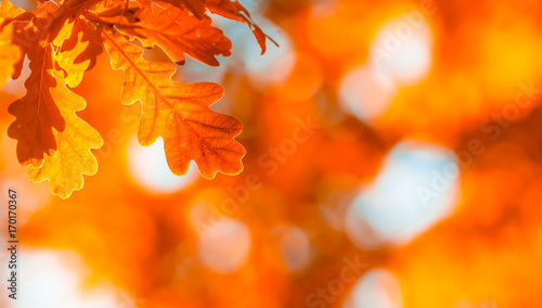 autumn leaves, very shallow focus - 170170367