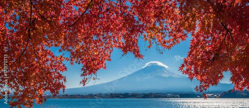 Foto auf Leinwand Japan Mount Fuji and autumn maple leaves, Kawaguchiko lake, Japan