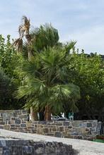 A Tall Green Palm Tree Grows Behind A Stone Fence