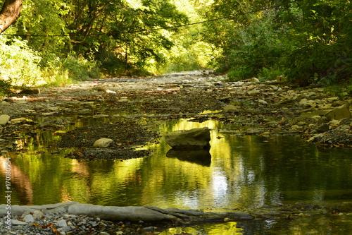niewielka-rzeka-w-lesie-w-ciagu-dnia