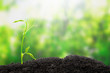 Young sprout. Green seedling growing from soil on bright background. Can be used for Earth Day, Ecology, enviornment protection