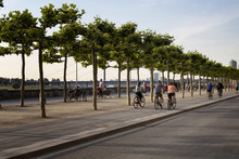 People Ride Bicycles By Rhine (Rhein) River. Tree Line Is Also In The View. Image Communicates Lifestyle And Culture Of Dusseldorf.