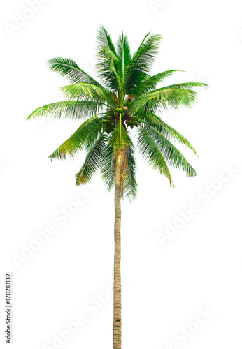 Staande foto Palm boom Palm coconut isolated on white background