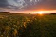 Kornfeld in der Landschaft bei Sonnenuntergang