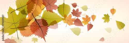 Fotografia, Obraz  Vector banner dead leaves, autumn background