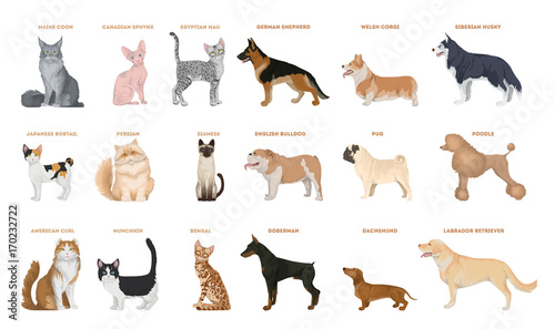 Foto  Dogs and cats set.