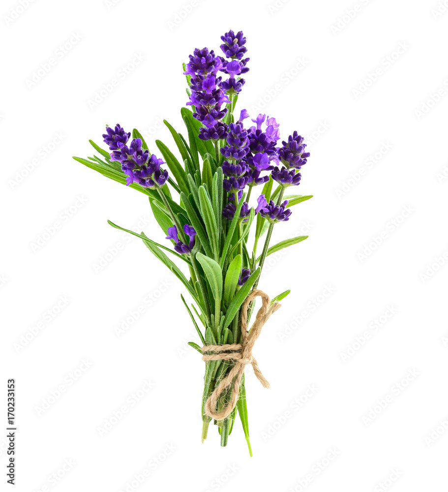 Fototapety, obrazy: Bunch of lavender flowers isolated on a white