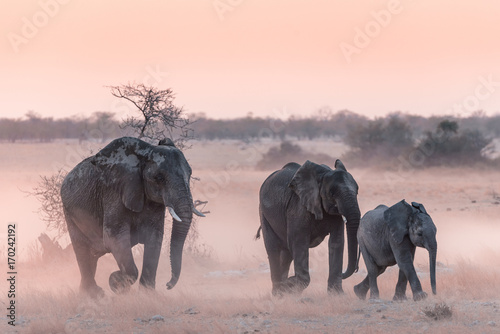 Photo  Etosha Elephants