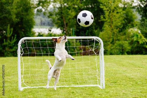 Fotografie, Obraz  Amusing goalie catching generic football (soccer) ball saving goal