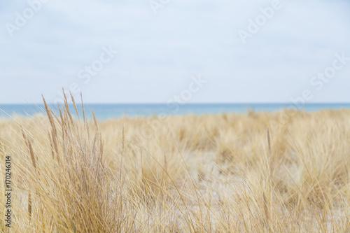 Fényképezés  Dünengras weht im Wind und im Hintergrund ist das Meer zu sehen