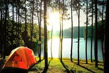Orange Camping Tents In Pine Tree Forest By The Lake At Pang Oung Lake (Pang Tong Reservoir), Mae Hong Son, Thailand.