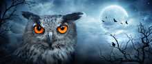 Angry Eagle Owl At Moonlight I...