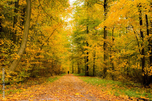 Photo Stands Road in forest Lone person walking in a beautiful forest in autumn