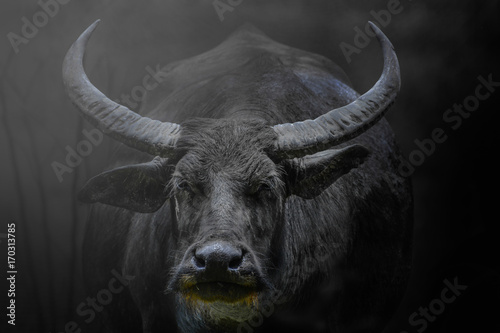 Deurstickers Buffel Close up monochrome portrait big buffalo