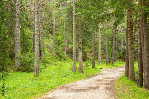 Photo Stands Road in forest a path trough a forest in Alps