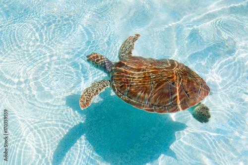 Foto op Aluminium Schildpad Green sea turtle. Close-up