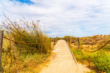 Wooden Boardwalk In The Dunes Leading To The Sandy Beach, The Path By The Sea, Plants On The Dunes