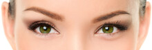Green Eyes Asian Woman Eyelashes Makeup Banner. Closeup Of Almond Chinese Eyes And Eyebrows, With Eyeshadow Make-up And False Eyelashes