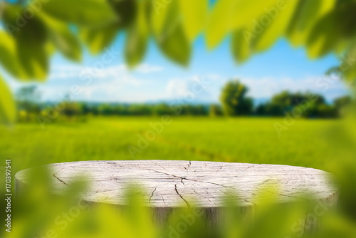 Poster Trees Wood table with Green leaves and Forest on the blurred background.Ready for product display.