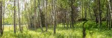 En Skogstig Som Slingrar Sig Fram I Skogsbrynet
