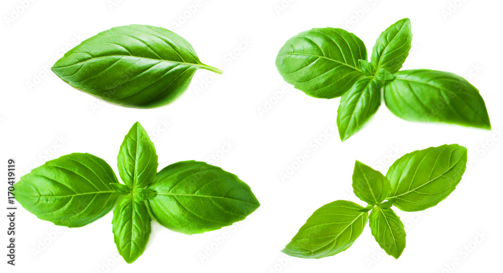 Fototapety, obrazy: Set of Basil leaves isolated on white background. Macro. Top view. Flat lay.